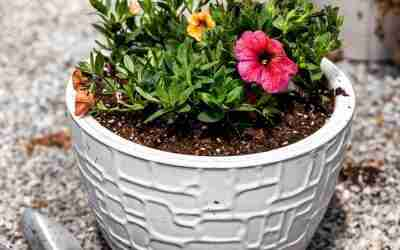 How to Bring Your Dead Planters Back to Life